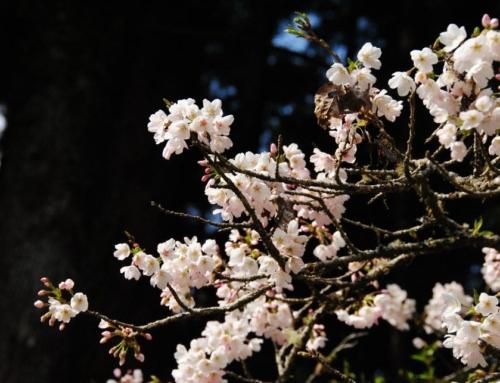 【居家安全】春節闔家出遊 居家安全要FOLLOW